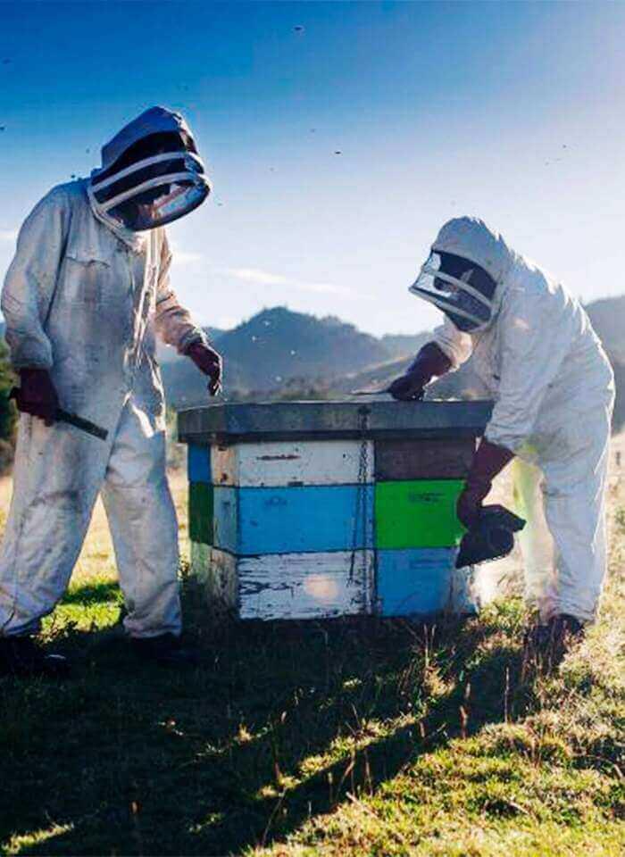 How Is Manuka Honey Produced